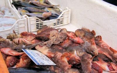 Ägadische Inseln, Favignana-Fischerhafen (4)