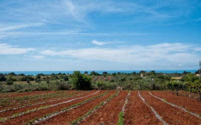 Agriturismo Menfi Gemüsegarten
