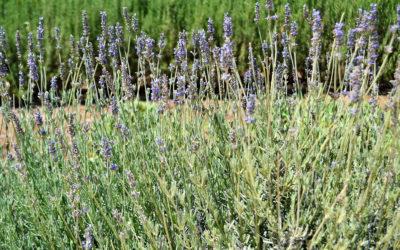 Garten Agriturismo Menfi (1)
