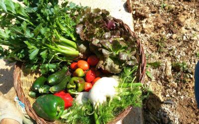 Gemüsegarten Agriturismo Menfi (2)