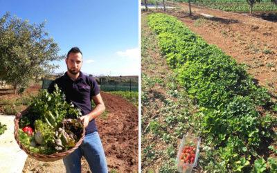 Gemüsegarten Agriturismo Menfi (3)