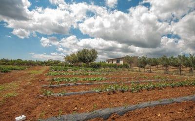 Gemüsegarten im Agriturismo