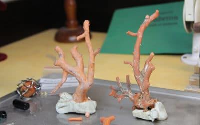 Korallenlabor in Sciacca (2)