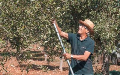 Olivenernte im Agriturismo (6)
