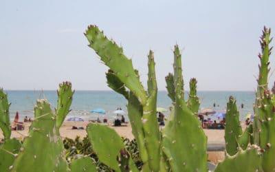 Sandstrand Portopalo (4)