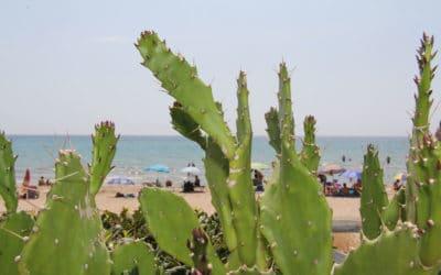 Sandstrand Portopalo im Sommer (4)