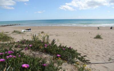 Strand Portopalo in April (6)