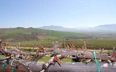 Weinprobe auf Sizilien
