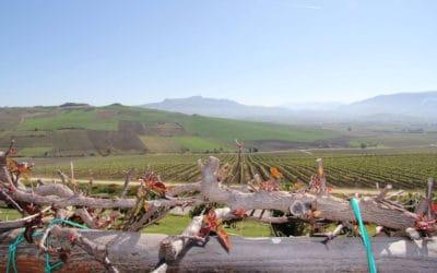 Weinprobe auf Sizilien (3)
