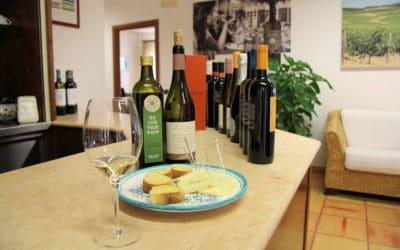 Weinprobe auf Sizilien (4)