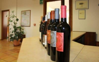 Weinprobe auf Sizilien (8)