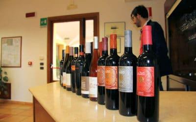 Weinprobe auf Sizilien (9)